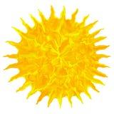 Das Kunstöl, das bunte Schmutzsonne zeichnet, lokalisierte abstrakten Hintergrund Stockbild