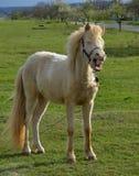 Das Lächeln eines Pferds Lizenzfreie Stockfotos