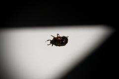 Das Lügen kann Käfer an der Badewanne Lizenzfreie Stockfotografie