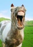 Das lachende Pferd Lizenzfreies Stockbild