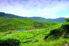 Das Land des Tees bei Cameron Highland Stockfotografie
