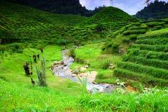 Das Land des Tees bei Cameron Highland Lizenzfreie Stockfotografie