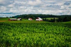 Das Landleben Lizenzfreie Stockbilder