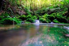Das Landschaftsfoto, der schöne Wasserfall und der Ahorn im Regenwald, Wasserfall in Thailand Lizenzfreie Stockfotografie