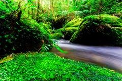 Das Landschaftsfoto, der schöne Wasserfall und der Ahorn im Regenwald, Wasserfall in Thailand Stockbilder