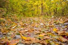 Das Laub auf dem Waldboden ist- mit herbstlichen Fallfarben funkelnd stockfotografie