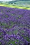 Das Lavendelfeld Lizenzfreies Stockfoto