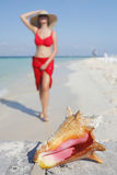 Das Leben ist ein Strand (Tritonshorn) Lizenzfreie Stockfotos