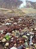 Das Leben kommt auf Papandayan-Vulkan in Java Indonesia zurück Stockbilder