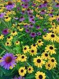 Das Leben lächelt in den Blumen Stockfotos
