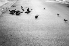 Das Leben von Vögeln Stockbild