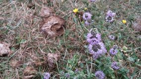 Das Leben wächst vom Düngemittel - Blumen Lizenzfreies Stockfoto