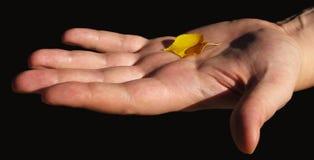 Das letzte gelbe Herbstblatt in der Hand Stockfotografie