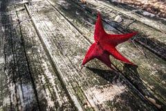 Das letzte rote Blatt Stockfoto
