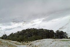 Das Libanonzeder-Schongebiet nördlich Bcharre im Libanon stockfotografie