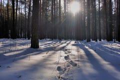 Das Licht überschreitet durch die Niederlassungen von Bäumen Lizenzfreies Stockfoto
