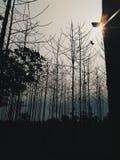 Das Licht hinter dem Schatten Stockbilder
