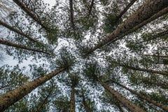Das ` Lungen ` des Planeten stockfotografie