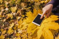 Das Mädchen benutzt Telefon im Herbstpark stockbilder