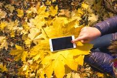 Das Mädchen benutzt Telefon im Herbstpark lizenzfreie stockfotos