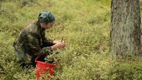 Das Mädchen fand einen Pilz im Wald stock video footage