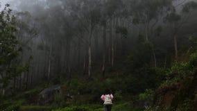 Das Mädchen geht im Wald stock footage