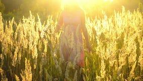Das Mädchen geht langsam über das Feld an einem sonnigen Tag stock video footage