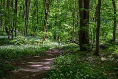 Das Mädchen im Wald Lizenzfreie Stockfotografie