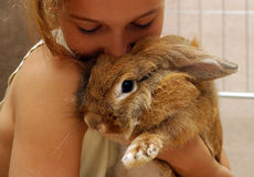 Das Mädchen mit dem Kaninchen Stockbilder