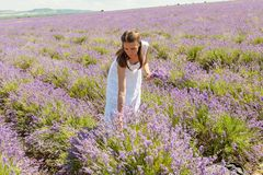 Das Mädchen sammelt Lavendel Lizenzfreie Stockbilder