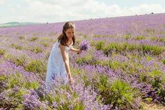 Das Mädchen sammelt Lavendel Lizenzfreies Stockbild
