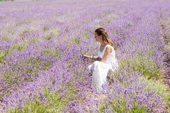 Das Mädchen sammelt Lavendel Stockbilder