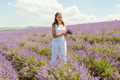 Das Mädchen sammelt Lavendel Stockfoto