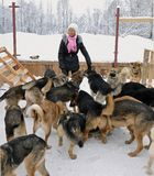 Das Mädchen und die Hunde Lizenzfreies Stockfoto