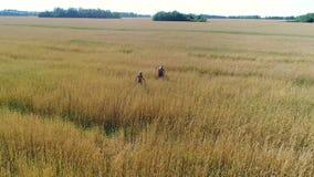 Das Mädchen und ihr Baby gehen durch ein Weizenfeld Schießen von einem Brummen Freizeit und Unterhaltung im offenen stock footage