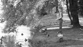 Das Mädchen zieht die Vögel auf dem Seeufer im Park ein stock video