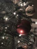Das magische dunstige Licht von Weihnachten stockfotos
