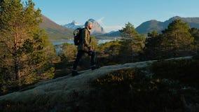 Das Manngehen wandern ansteigend Männliches touristisches Trekking, das draußen auf eine Spur im Sommer geht Sch?ner Sommersonnen stock video footage