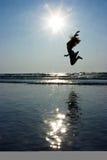 Das Mädchen hoch springend Stockfoto