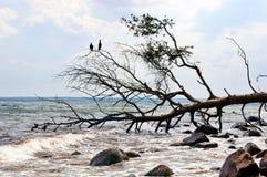 Das Meer Lizenzfreies Stockfoto