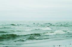 Das Meer u. die Seemöwe Stockbilder