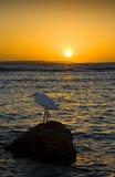 Das Meer und ein Reiher Lizenzfreie Stockfotografie