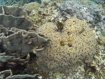 Das Meer von †‹â€ ‹Anemonen Thailands, Meer sind Meer Lizenzfreie Stockbilder