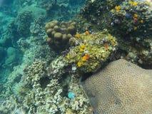 Das Meer von †‹â€ ‹Anemonen Thailands, Meer sind Meer Lizenzfreie Stockfotos