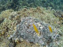 Das Meer von †‹â€ ‹Anemonen Thailands, Meer sind Meer Stockfoto