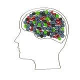 Das menschliche Gehirn wird von den Beeren, gesunder Lebensstil ausgebreitet Lizenzfreies Stockfoto