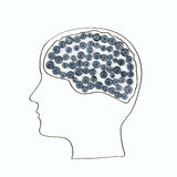 Das menschliche Gehirn wird von den Beeren, gesunder Lebensstil ausgebreitet Lizenzfreie Stockbilder