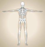 Das menschliche Nervensystem Lizenzfreie Stockfotos