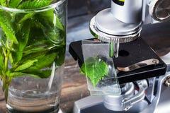 Das Mikroskop der Kinder in der Stilllebentabelle verlässt, pflanzt, Laub, Biologie, Bleistifte, Notizbuch stockfotografie