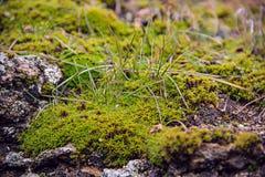 Das Moos auf dem Stein, Gras, Nahaufnahme Lizenzfreies Stockfoto